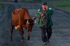 О молитве и спасении коровы