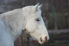 Лошадь Маня. Фото: Сайт Ярославской митрополии