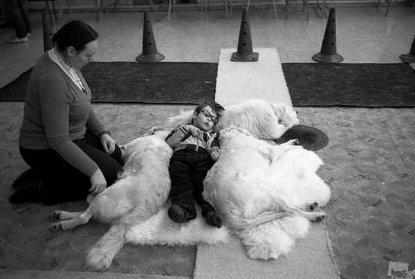 СОЛНЕЧНЫЙ ПЕС Собаки-терапевты - уникальное средство реабилитации детей с особенностями развития. Использование собак-терапевтов - канис-терапия - направлено на решение проблем интеграции и социальной адаптации детей с ограниченными возможностями. Это направление имеет богатую историю за рубежом, в России же появилось относительно недавно и активно развивается.