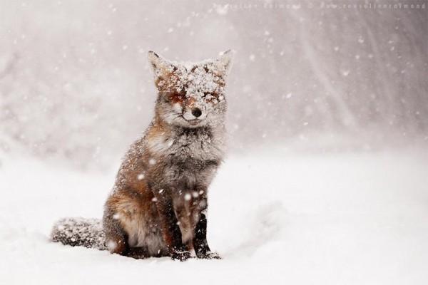 Звери под снегом