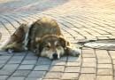 В Госдуме предложили запретить отстрел бродячих собак