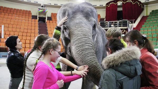 Артисты и животные ярославского цирка выступают для незрячих детей