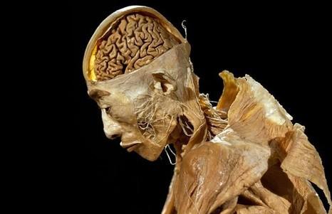 Православные Краснодарского края протестуют против проведения анатомической выставки