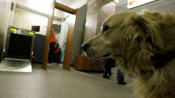 В Московском метро будут обучать собак-поводырей