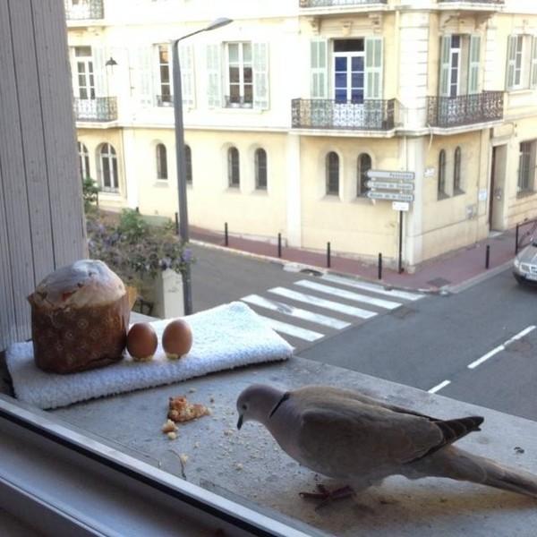 Голубь прилетел на подоконник в пасхальный день в Каннах. Фото: @yulia_torres