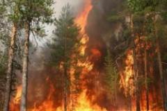 Из-за пожаров в Амурской области ввели режим чрезвычайной ситуации