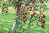 Епископ Орский Ириней с духовенством и монахами посадит фруктовый сад