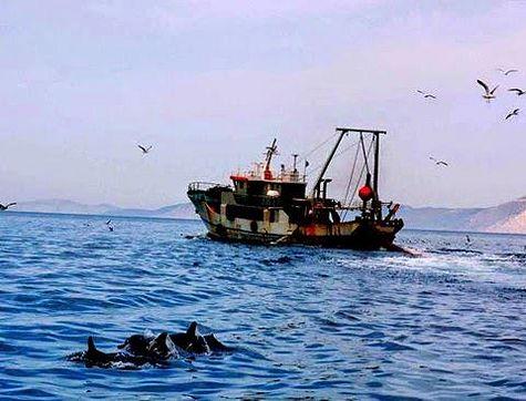Афонским монахам угрожают браконьеры
