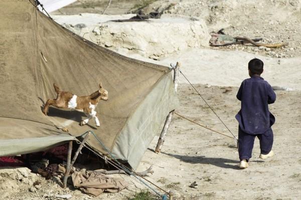 Маленький мальчик убегает от козы, которая в погоне за мальчиком забралась на крышу палатки, где живет его семья. Провинция Пактия, Афганистан, 14  июля 2012 года. (Рейтер / Лукас Джексон)