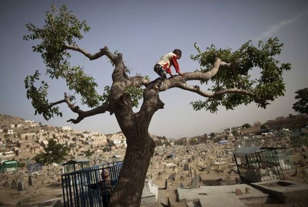 Мальчик лезет на дерево на кладбище в Кабуле, 5 июня 2011 года. (Рейтер / Ахмад Масуд)