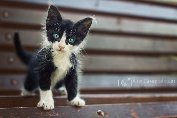 Без кота и жизнь не та (ФОТО)