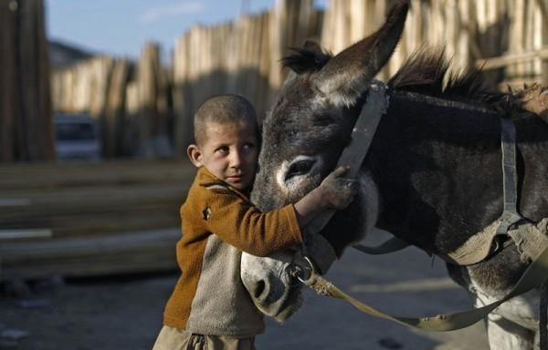 Мальчик держит своего ослика около рынка лесоматериалов в Кабуле, 2 ноября 2012 года (Рейтер / Аднан Абиди)
