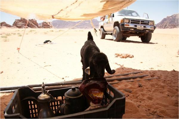 Под сенью бедуинской палатки