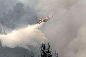 Гражданин Латвии подозревается в поджоге леса на Афоне
