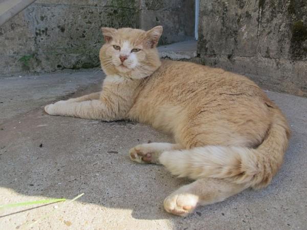 Монастырский Рыжик. Еще есть черный Моня и черно-белые коты