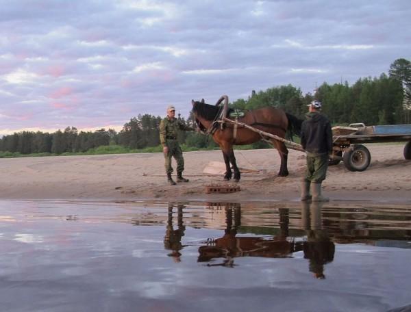 Паломников ждет горячий монастырский конь Иртыш - можно положить вещи в повозку и идти к обители налегке