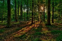 В московском храме будут молиться о сохранении российских лесов