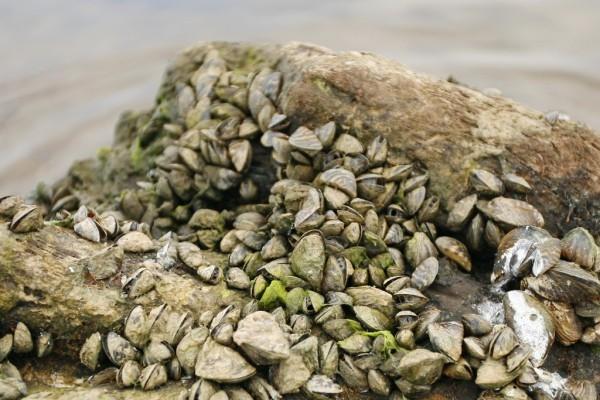 На пустынных отмелях можно встретить только чаек, водоросли и коряги, облепленные ракушками.