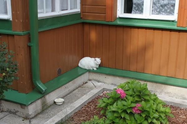 Этому коту явно не до мышей
