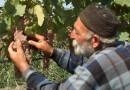 Про грузинское вино, моих дедов и нашу Родину Россию