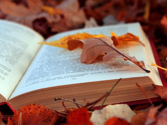 Что читать на выходных: основные материалы недели (29 сентября — 3 октября)