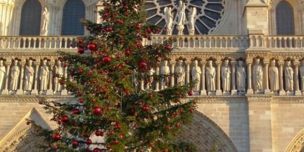 Перед собором Парижской Богоматери установили Рождественскую ель из Москвы