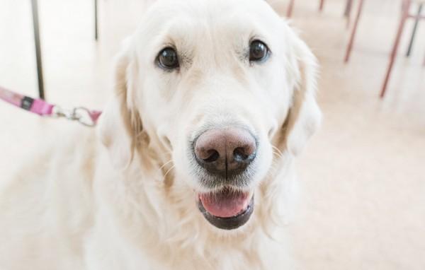На фото – собака волонтера Вероники Хмызовой Луна