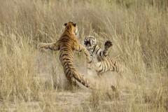 Лучшие фото 2014 года по версии National Geographic