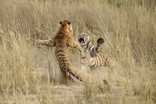 © Archna Singh / National Geographic 2014 Photo Contest