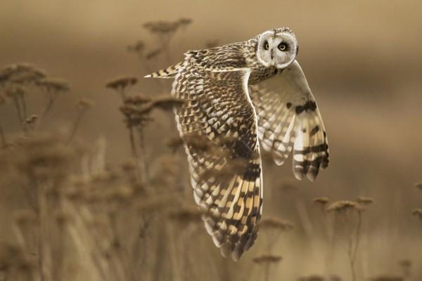 © Henrik Nilsson / National Geographic 2014 Photo Contest