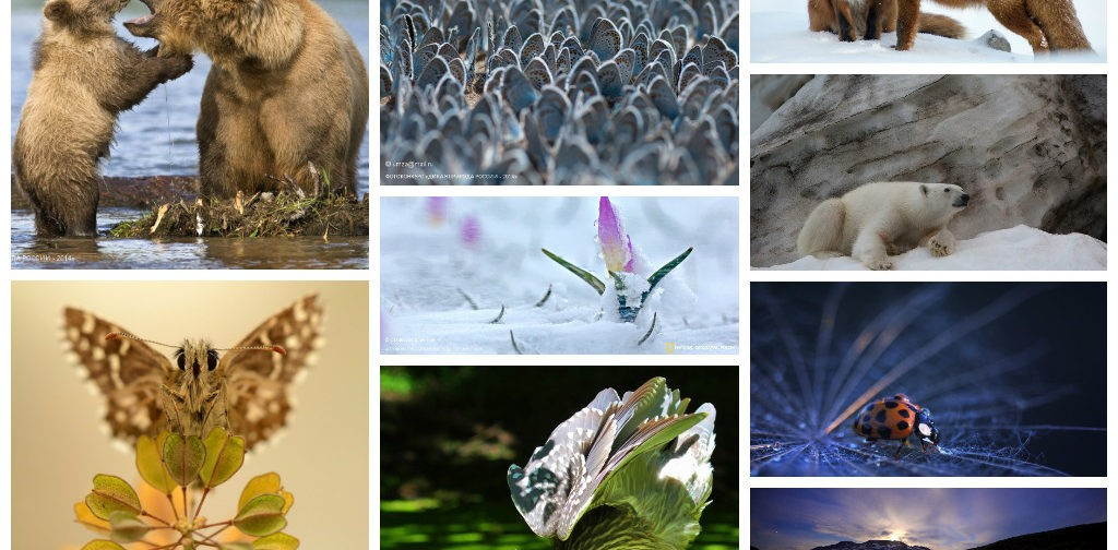 «Дикая природа России-2014»: 36 лучших фото