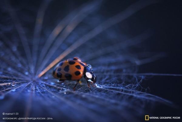 Ladybird. 2-ое место в номинации «Юные таланты». Автор: Марина Остапенко