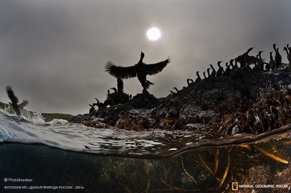 «Солист». 2-ое место в номинации «Птицы». Автор: Андрей Сидоров