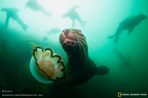 «Игра». 2-ое место в номинации «Подводная съемка». Автор: Андрей Нарчук