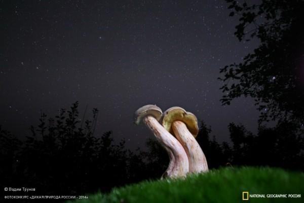 «Под звёздами». 2-ое место в номинации «Растения». Автор: Вадим Трунов.