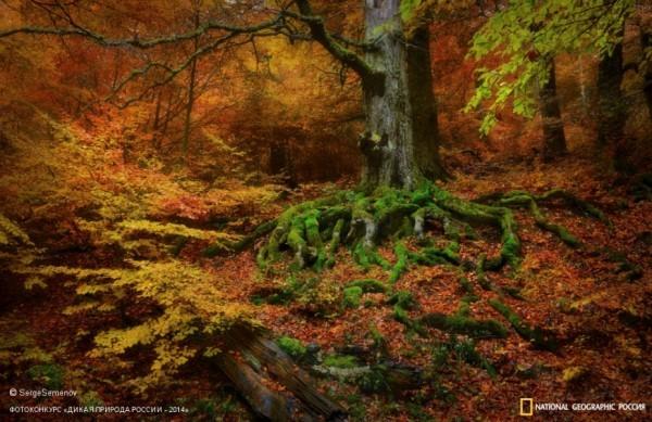 «Буковый лес». 2-ое место в номинации «Пейзажи». Автор: Сергей Семенов.