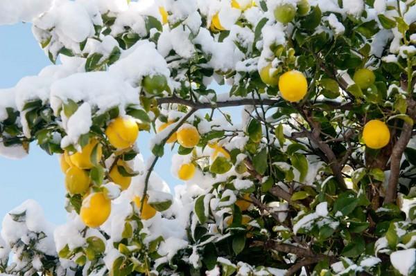 49 фото Иерусалима под снегом