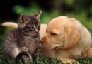 Депутаты Мосгордумы предлагают ввести обязательную регистрацию домашних животных