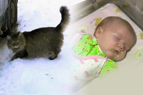 В Калужской области кошка несколько часов согревала подброшенного в подъезд малыша