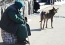 Госдума предлагает штрафовать за попрошайничество с животными