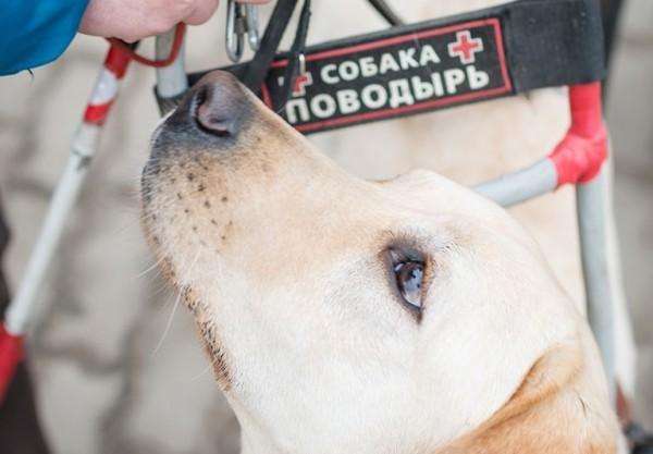 Один день с собакой и белой тростью