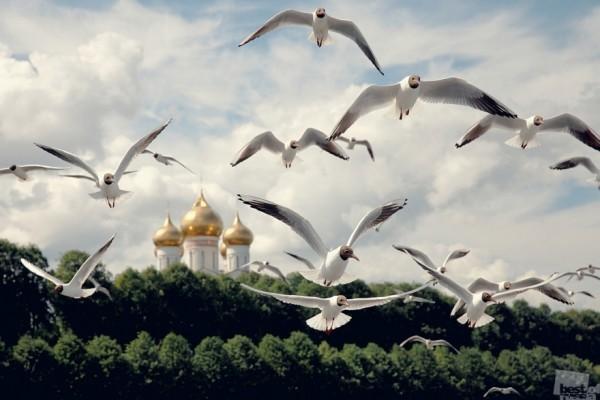 Стражи города Река Волга, Ярославль, лето 2014 г. Автор - Андрей Колабухин