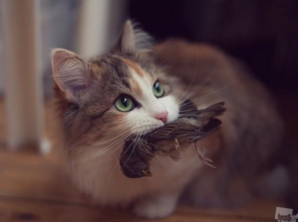 Инстинкт Животный инстинкт есть даже у милой домашней кошки Автор - Олег Токарев
