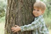 Пастырь детей и деревьев