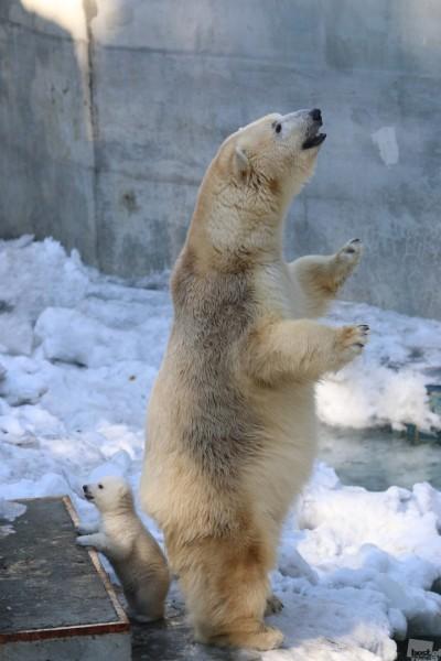 Тандем В Новосибирском зоопарке Автор - Алексей Цилер