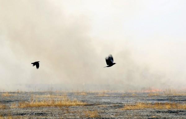 Пожары в Хакасии: 6 погибших, 121 пострадавший