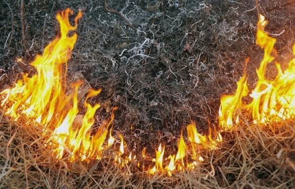 Причиной запаха гари в Москве мог стать поджог травы в Тульской и Калужской областях