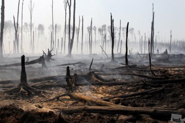 Лесные пожары в Тверской области. Автор - Ольга Чумаченко