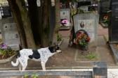 Москвичей, которые не ухаживают за могилами родных, могут привлечь к административной…