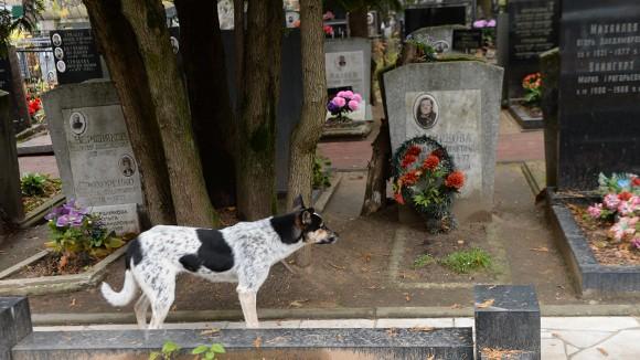Москвичей, которые не ухаживают за могилами родных, могут привлечь к административной ответственности